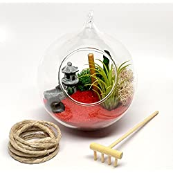 Pixie Glare Hanging Glass Terrarium Zen Garden Scene with Live Air Plant, Miniture Temple, Wood Rake, Bamboo and More (Red Sand #1)