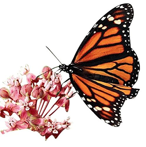 Monarch Butterfly Attracting Flower Mix - Approximate;y 5000 Seeds