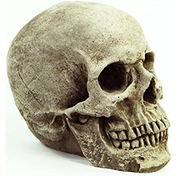 Amazon Com Skull Head Concrete Garden Statue Cement