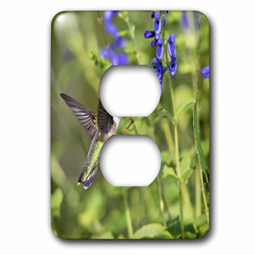 3dRose Danita Delimont - Hummingbirds - Ruby-throated Hummingbird at Blue Ensign Salvia, Marion Co, Illinois - Light Switch Covers - 2 plug outlet cover ()