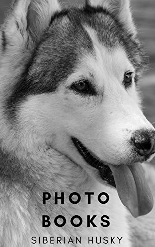 Photo Books Siberian Husky Dogs Cute Siberian Husky Dogs Photo