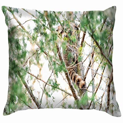 Hiding Wild Raccoon Climbing Pine Tree Animals Wildlife Adorable Parks Outdoor Pillow Case Throw Pillow Cover Square Cushion Cover 18X18 Inch
