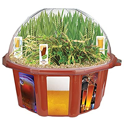 Dunecraft Beer Garden Domed Terrarium: Toys & Games