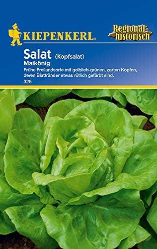 Kiepenkerl Saatgut, Salat (Kopfsalat) Maikönig, Inhalt: für ca. 200 Pflanzen, Frühe Freilandsorte mit gelblich-grünen, zarten Köpfen