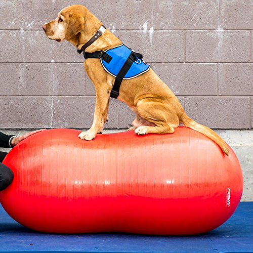 FitPAWS Peanut Canine Stability Ball by FitPAWS