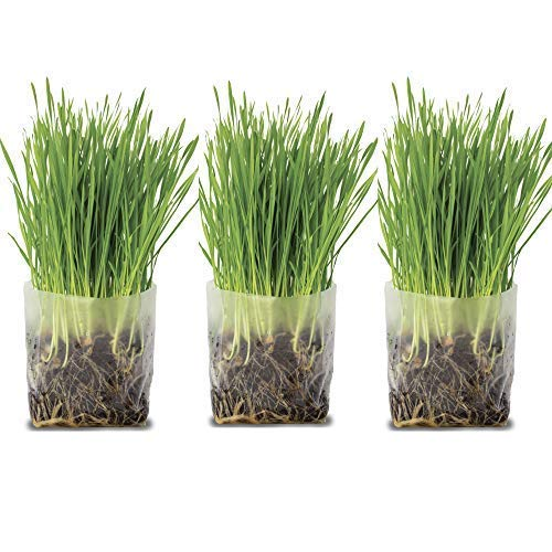 Pop Up Cat Grass Kit (3 Pack) - Just Add Water and Seed. The Perfect Size Snack Your Pets Will Love. Includes Organic Non GMO Wheatgrass Seed and Fiber Soil in a Bag. Easy Growing, Store and Serve.