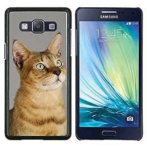 LECELL--Funda protectora / Cubierta / Piel For Samsung Galaxy A5 A5000 -- Chausie Abisinia Serengeti Sokoke --