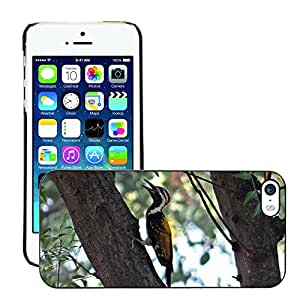 Just Phone Cases Slim Protector Hard Shell Cover Case // M00128013 Black-Rumped Flameback // Apple iPhone 5 5S 5G