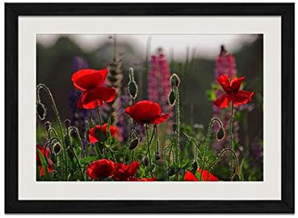 Amazon beautiful red poppies flowers art print wall black beautiful red poppies flowers art print wall black wood grain framed picture16x12inch mightylinksfo