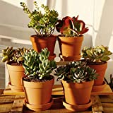 Terra Cotta Pots with Saucer- 6-Pack Large
