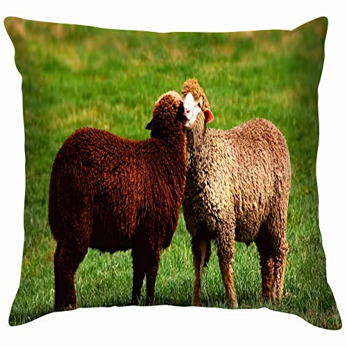 Black White Sheep Cuddle Together Love Animals Wildlife Agriculture Nature Funny Square Throw Pillow Cases Cushion Cover for Bedroom Living Room Decorative 18X18 - Cuddle Ewe Cotton