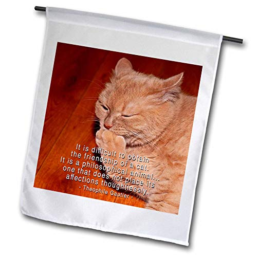 3dRose Alexis Photography - Animals Cats - Ginger Cat. It is Difficult to Obtain The Friendship of a cat - 12 x 18 inch Garden Flag (fl_310489_1)