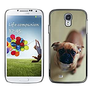 Exotic-Star Snap On Hard Protective Case For Samsung Galaxy S4 IV (I9500 / I9505 / I9505G) / SGH-i337 ( Cute Curious Dog )