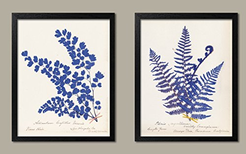 Lovely Blue Botanical Fern Set by Wild Apple Portfolio; Two 11x14in Black Framed Prints; Ready to hang! ()