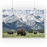 Grand Teton National Park, Wyoming - Buffalo and Mountain Scene (9x12 Collectible Art Print, Wall Decor Travel Poster)