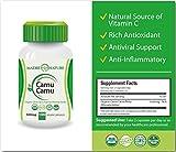 Organic Camu Camu Berry Supplement 500mg x 100 Vegan Capsules - Natural Vitamin C - Fresh Harvest from Peru 1-Pack Discount