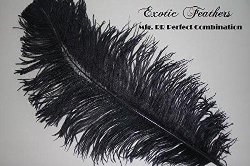 Special Sale 100 Pcs. BLACK OSTRICH Feathers Wholesale Bulk 13/18'' long DELUXE FEATHERS by Exotic Feathers LA est. 1973 (Image #2)