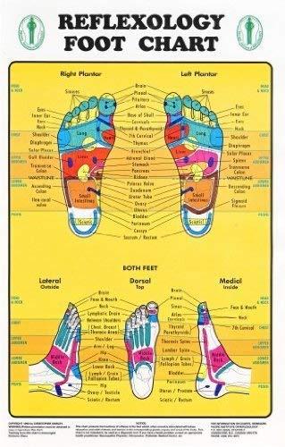 - Reflexology Foot Chart - Reflexology Zones Marked. 1 Laminated Chart 8