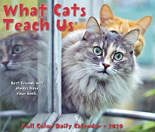 - What Cats Teach Us 2020 Box Calendar