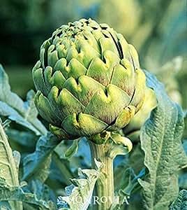 200 Seeds Green Globe Artichoke New seeds for 2017 Non-GMO Heirloom