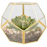 Brass and Glass Coffee Table Glass Terrarium, Succulent & Air Plant (Sphere)