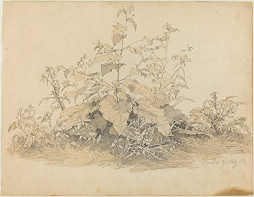 Artist: Johann Christian Heerdt | Drawing: Wild Plants near Birstein | Date: 1835 | Vintage Fine Art Print by historic pictoric