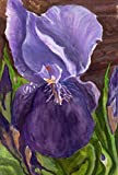 magnificent artistic wall art Paintings original art -Purple Iris Majesty -original painting by Gail M Austin watercolor and mixed media painting purple iris flower on paper