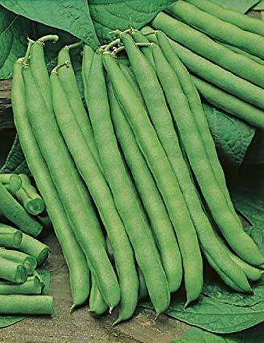 Blue Lake Pole Beans - David's Garden Seeds Bean Pole Blue Lake FM1K SL0007 (Green) 100 Non-GMO, Heirloom Seeds