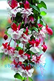 Hot Sale! 200pcs Fuchsia Flower,lantern flower seeds,Bell Flower, Lantern Begonia,bonsai flower seeds,plant for home & garden
