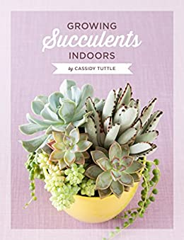 Growing Succulents Indoors A Detailed Guide For Taking