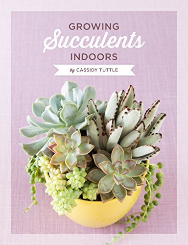 Growing succulents indoors a detailed guide for taking care of your growing succulents indoors a detailed guide for taking care of your succulents indoors succulent fandeluxe Gallery