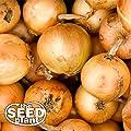 Granex Yellow Onion Seeds - 300 SEEDS NON-GMO