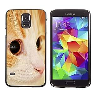 TopCaseStore / la caja del caucho duro de la cubierta de protección de la piel - Somali Orange American Shorthair Cat - Samsung Galaxy S5 SM-G900