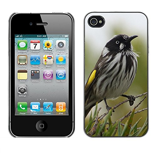 Premio Sottile Slim Cassa Custodia Case Cover Shell // F00014931 oiseau // Apple iPhone 4 4S 4G