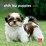 Shih Tzu Puppies 2013 7X7 Mini Wall