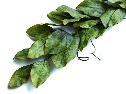 Magnolia Leaves - 4