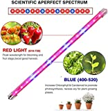 CXhome Plant Light T5 Red & Blue 4 Packs Grow