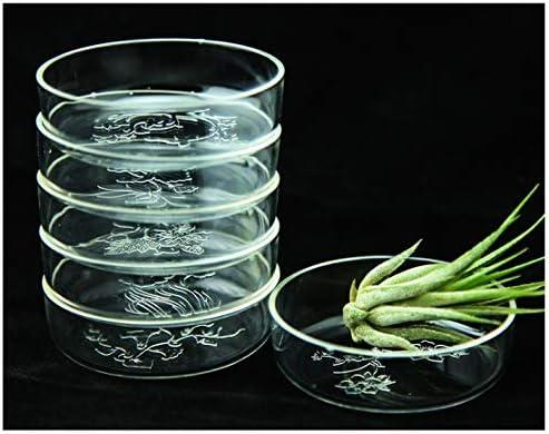 Plato para acuario diseñado para alimentar camarones y reptiles 5