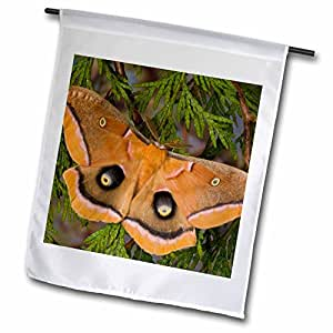 Danita Delimont - Insects - Silk moth insect, Sammamish Washington - US48 DGU0271 - Darrell Gulin - 18 x 27 inch Garden Flag (fl_95420_2)