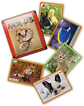 Panini- Animales 2019 Cromos (003713BOX50E): Amazon.es: Juguetes y ...