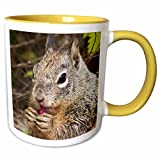 3dRose VWPics Africa - California Ground Squirrel eating a cactus fruit it holds in its paws -closeup.Irvine,California - 11oz Two-Tone Yellow Mug (mug_45636_8)