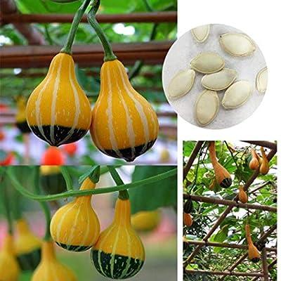 KOUYE GardenSeeds- Pumpkin Seeds Vegetable Rare Turks Turban Winter Squash Plant Seeds Vegetable Seeds Gourd Plants for Home Garden : Garden & Outdoor