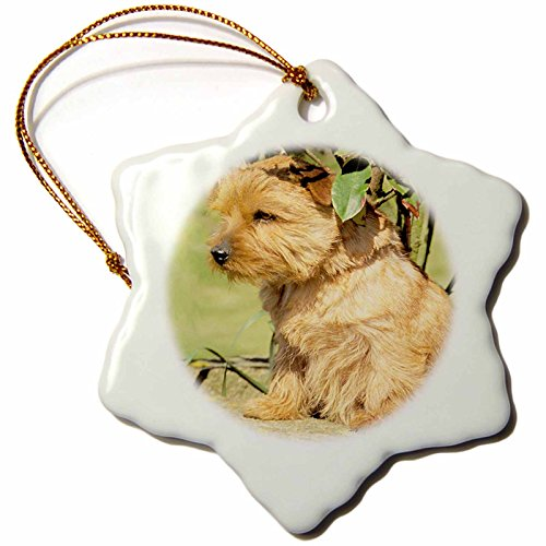 (3drose Norfolk Terrier Snowflake Porcelain Ornament, 3-Inch)