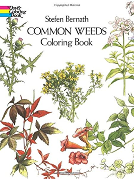 Coloring Wildflowers | 600x450