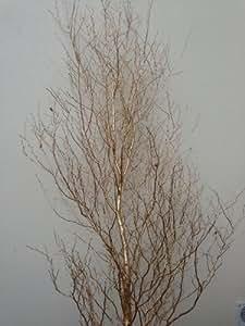 Adorno de abedul Wishing Tree 8–Árbol de oro con soporte (boda)