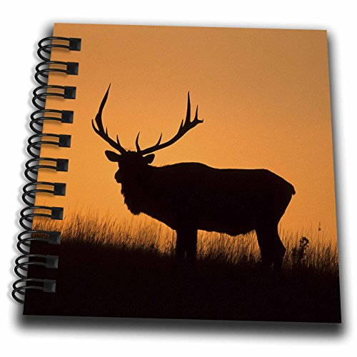 3dRose Elk Or Wapiti, Cervus Elaphus, Bull Silhouetted at Sunset, Montana Drawing Book 4 x 4