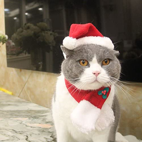 Amazon.com : EXPAWLORER Christmas Cat Costume Santa Hats - Xmas Gift Hat  with Scarf for Mini Dogs Puppy, Adorable and Warm : Pet Supplies