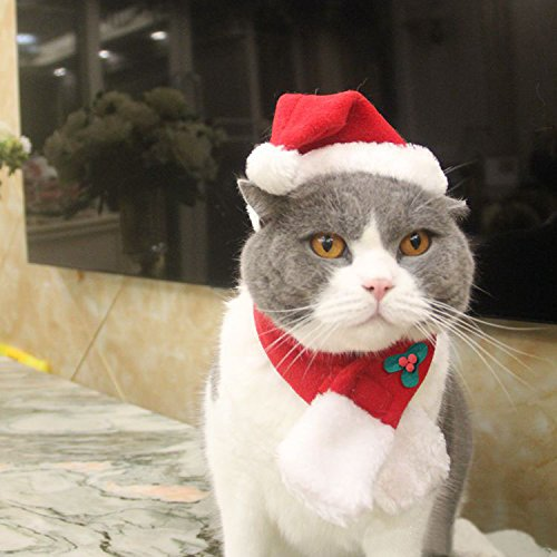 EXPAWLORER Christmas Cat Costume Santa Hats - Xmas Gift Hat with Scarf for Mini Dogs Puppy, Adorable and Warm -