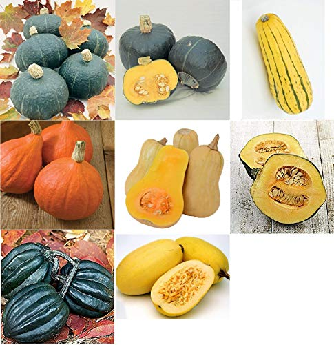 Collection Antioxidant - David's Garden Seeds Collection Set Squash Winter RV2247 (Multi) 8 Varieties 275 Seeds (Non-GMO, Open Pollinated, Heirloom, Organic)