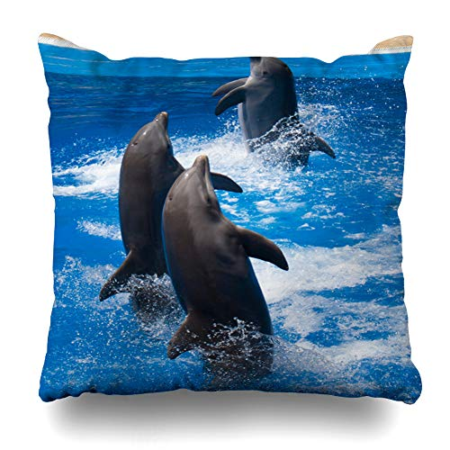 Ahawoso Throw Pillow Cover Love Aquarium Dolphins Frolic Blue Clear Water Ocean Selective Nature Aquatic Atlantic Design Dolphin Home Decor Pillow Case Square Size 18x18 Inches Zippered Pillowcase